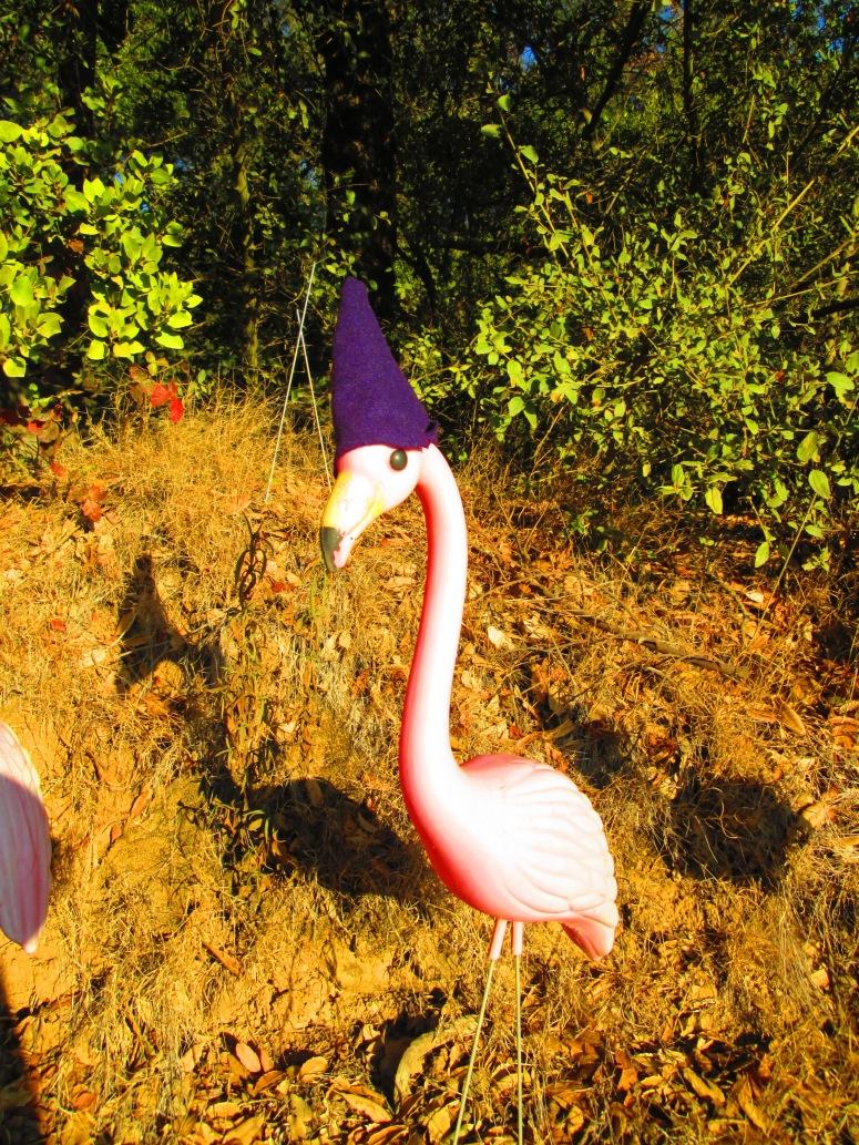 Frolicking Flamenco Flamingo